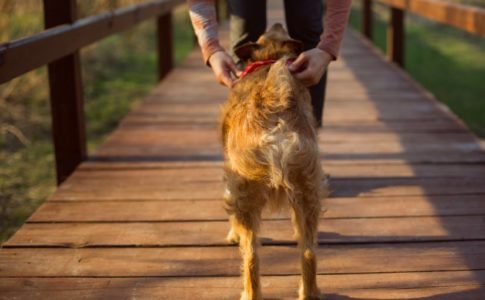 Dieta para perros esterilizados