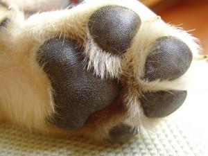 Cuidados de las patas y uñas de nuestro perro
