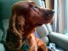¿Qué antiparasitarios externos puedes ponerle a tu perro?