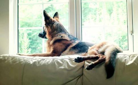 Alojamiento de vacaciones con perro