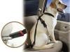 ¿Qué debes saber antes de llevar a tu perro de vacaciones?