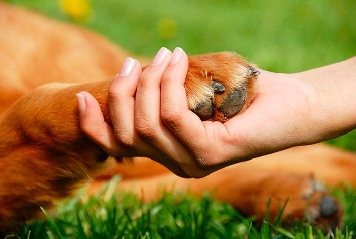 Enfermedad de artritis en perros