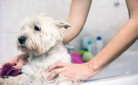 Cómo bañar a un perro alérgico