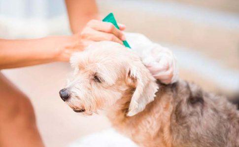 Bañar al perro con pipeta