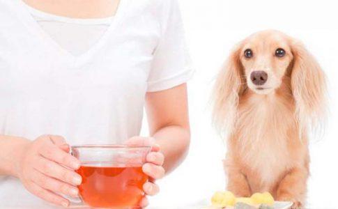 bañar al perro con vinagre de manzana