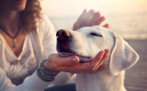 Ventajas de acariciar a tu perro