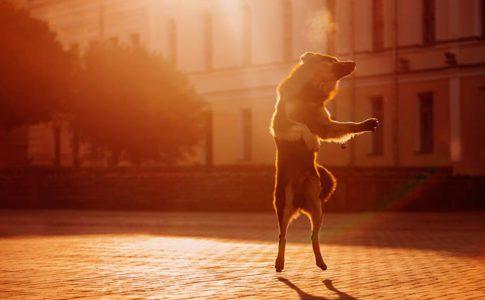 Qué es el entrenamiento dog dancing