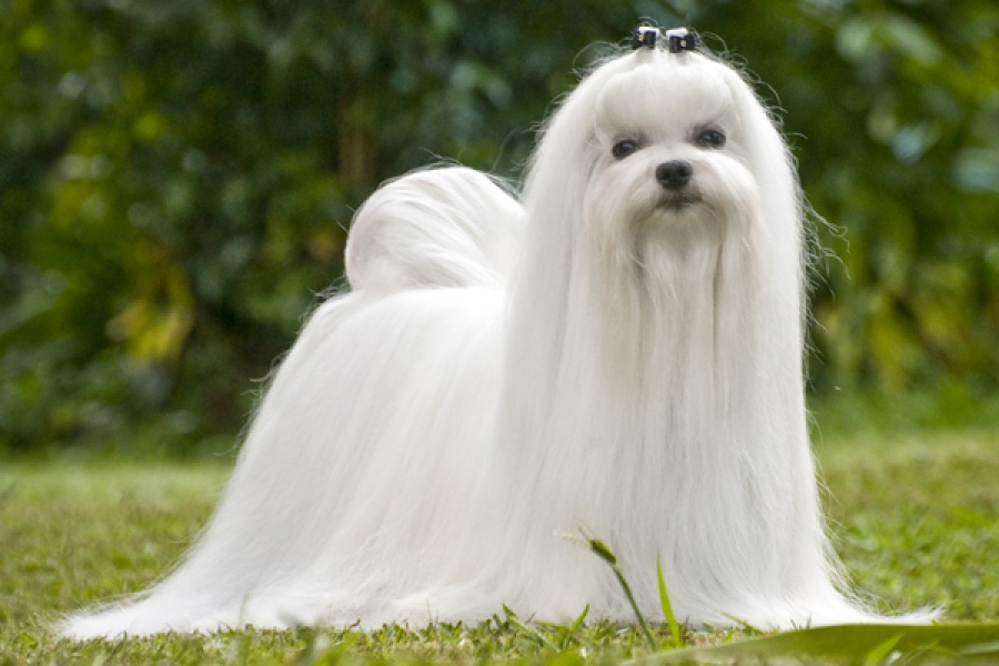 Vida de cachorro a perro adulto