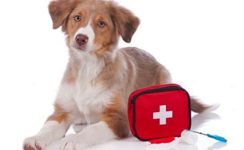 Botiquín veterinario para perros