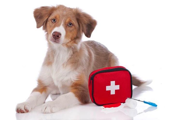 Conoce como brindar primeros auxilios veterinarios