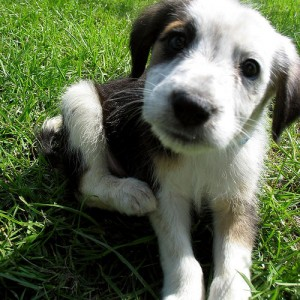 Llevar el perro al veterinario