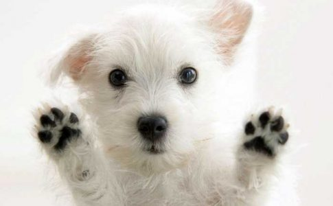 Cuando desparasitar a un cachorro