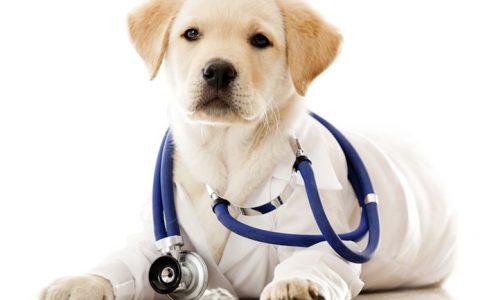 Cada cuánto tiempo tengo que llevar a mi perro al veterinario?
