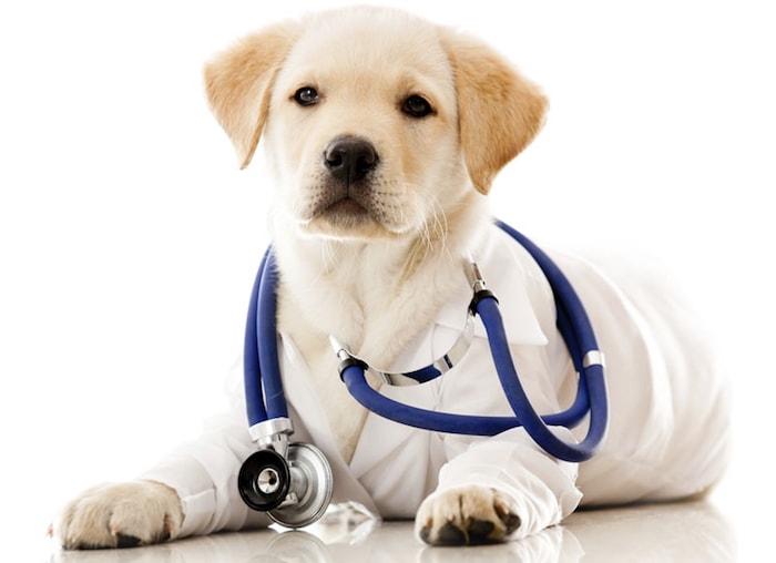 Cada Cuánto Tengo Que Llevar A Mi Perro Al Veterinario Mundo Perro