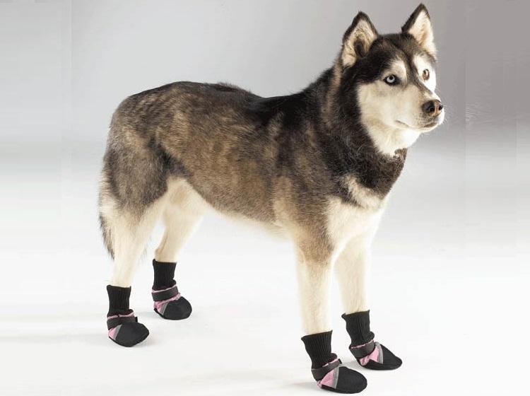 botas de proteccion para perros