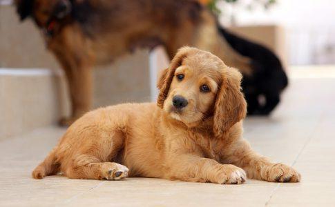 ¿Puedo cambiar el nombre de un perro adoptado?