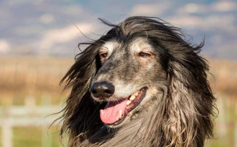Causas cambio de pelo en perros