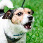 Comportamiento agresivo y perros esterilizados