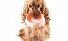 Cuál es la cantidad adecuada de pienso para perros