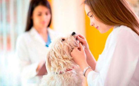 Cómo funciona la castración química en los perros