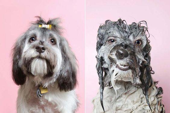 Cepillar a mi perro antes o después del baño? | Cepillar al perro
