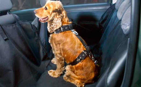 Arnés de seguridad para perros