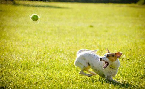 Eliminar los parásitos del perro