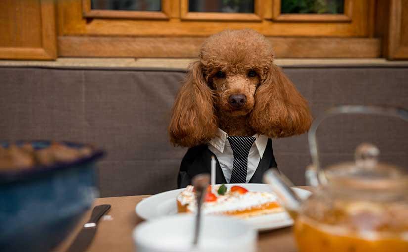 Comida de personas para perros