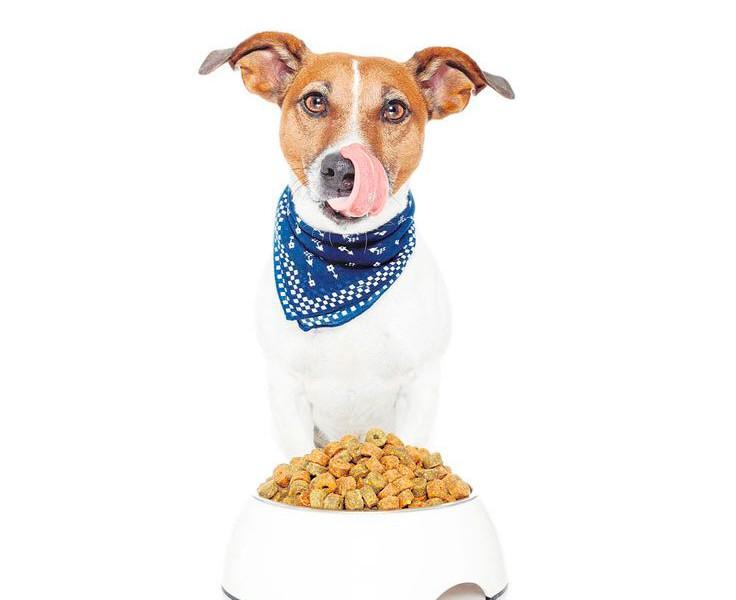Dieta seca para perros