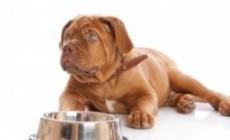 Dieta seca para perros diabéticos