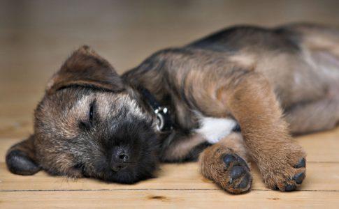 Qué hacer cuando un perro mayor convulsiona