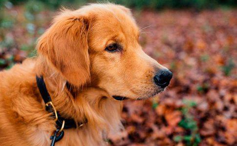 Adiestrar a un perro para que no estire la correa