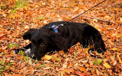 Cómo educar a un perro para que haga sus necesidades fuera de casa