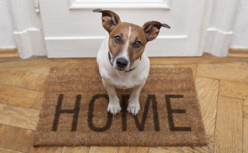 Adiestramiento de perros en casa