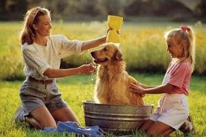 Formas de bañar a un perro