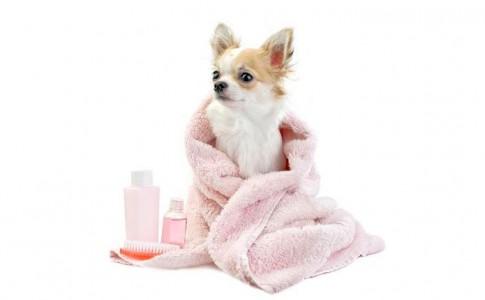 Formas de bañar al perro en seco