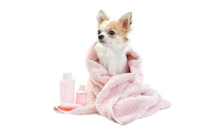 26cb29c3ebd3 ¿Tu perro necesita un baño pero está enfermo o tiene alguna herida? Pues el  baño para perros en seco es tu solución. Esta forma de bañar a un perro es  apta ...