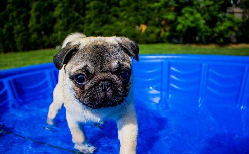 Cómo bañar a un cachorro por primera vez