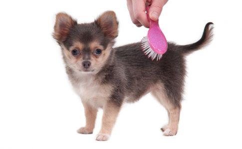 Cepillado de perro con el pelo corto