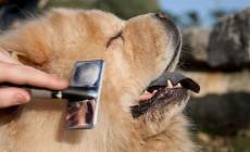 Técnicas de cepillado para perros de pelo largo