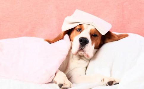 Cuidados de un perro enfermo