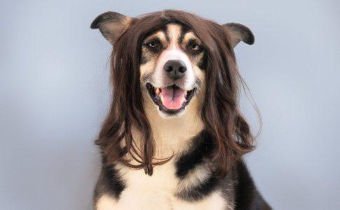 Pasos para cepillar a un perro con enredos