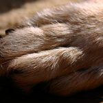 Desparasitación de perros con garrapatas