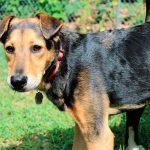 Desparasitación de perros con lombrices