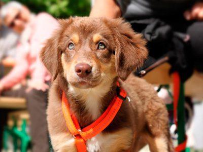 Consejos para elegir la correa del can
