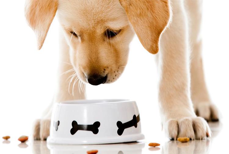 Cuál es el pienso para perros más recomendado
