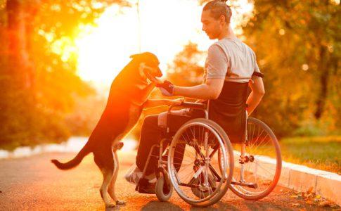 Cómo entrenar a perros de ayuda a discapacitados