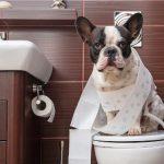 Cómo adiestrar a un perro para hacer pipí
