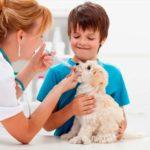 Cómo cuidar a un cachorro con fiebre
