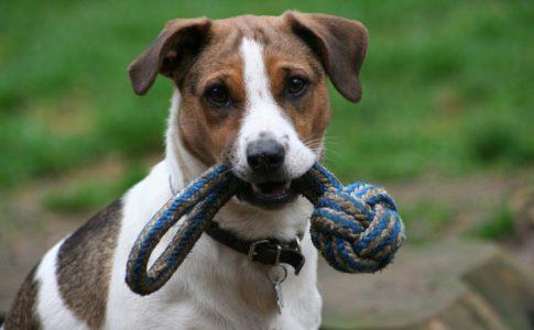 Corregir posesividad de los perros con los juguetes
